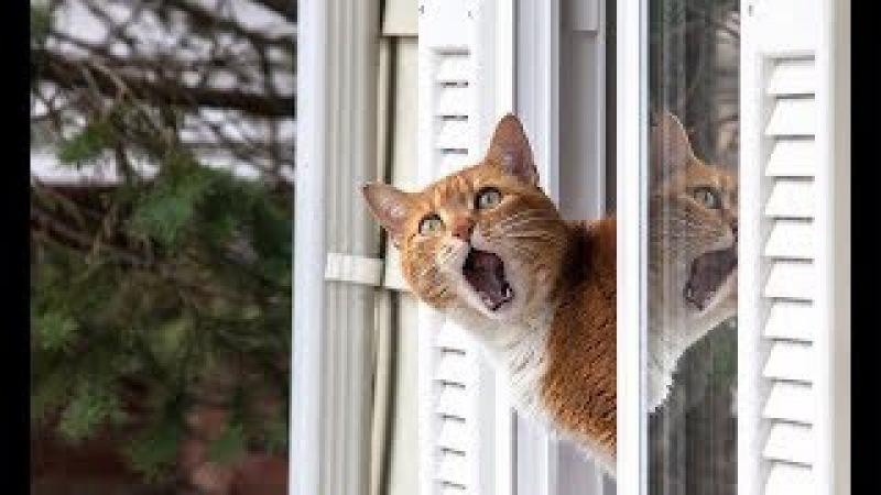 Смешные кошки приколы про кошек и котов 2017 79 Смешные попугаи и классные кошки