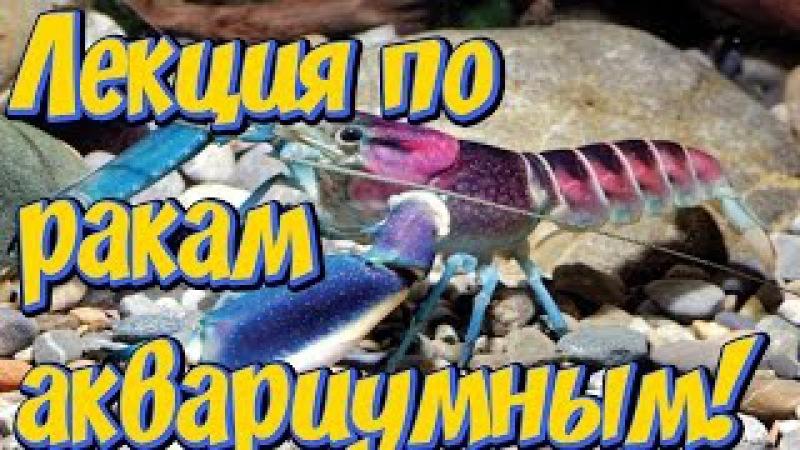 Аквариумные раки! Лекция по содержанию, кормлению, разведению аквариумных раков!