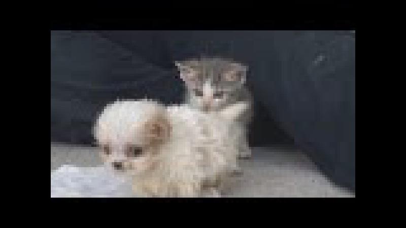 Милейшая дружба спасенных щенка и котенка