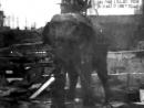 Thomas Edison Tarafından Elektrik Verilerek Öldüren Fil Topsy