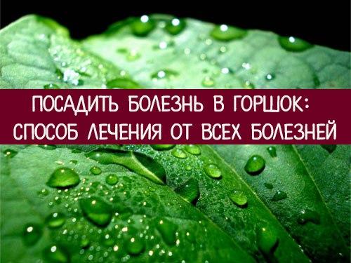https://pp.userapi.com/c639916/v639916283/e9c9/pDnLolD5IRE.jpg