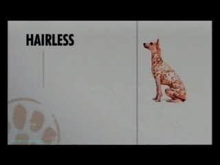 «Введение в собаковедение» (17 серия) (Научно-популярный, животные, 2009)