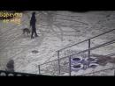 ВоркутаНеМёд | В Воркуте владельцы и собаки продолжают срать в общественных места
