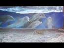 Дельфины пришли в восторг от белок