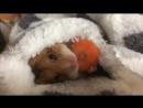 морковка перед сном