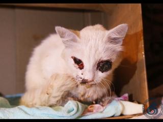 кошка получила сильный удар по голове, у нее ЧМТ, сломана челюсть, выбит глаз
