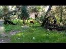 Красная панда ушла
