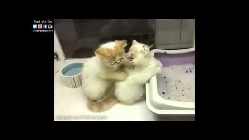 Масаж котиков
