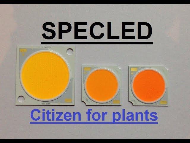 COB Citizen CLU03H-25/55-PW PRB. Светодиоды для растений, LED Citizen. Фитосветодиод