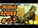 Смешные Кошки Приколы про Котов 2017