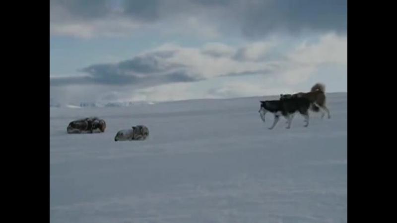 Gregorian-Moment of Peace vs antarktika