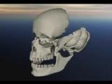 Краниосакральный ритм движения костей в лицевом черепе. Остеопатия. Краниосакрал