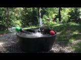 Медведь по имени Такода принимает ванну ...