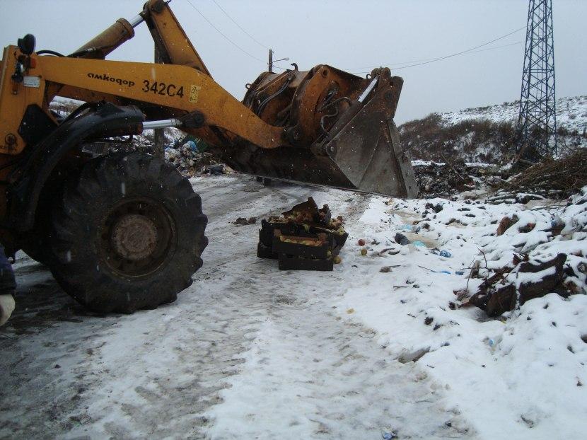 190 кг санкционных яблок уничтожили в Томске