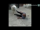 Битва двух баранов