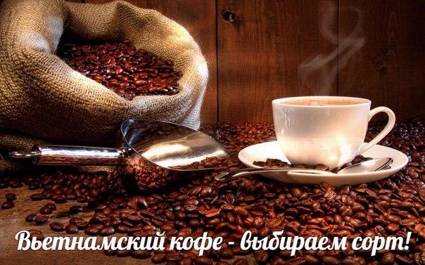 Какой кофе привезти из Вьетнама!  Вьетнам, как экспортер кофе, уступ