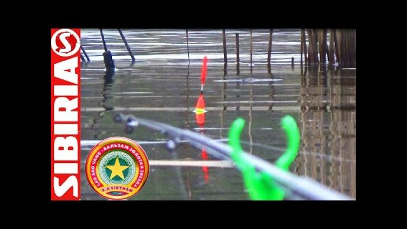 Рыбалка на ЗВЁЗДОЧКУ (вьетнамскую) Удачный эксперимент с наживкой Карась и лещ н...