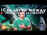 !Сходства между человеком и дельфином