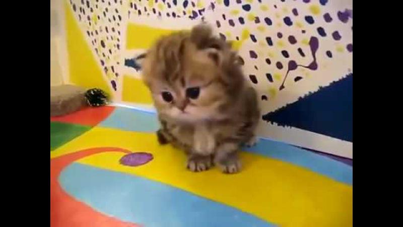 мимимишные котята!