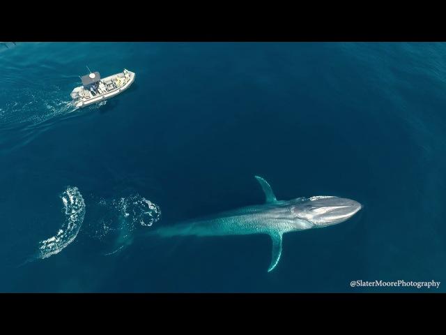 Blue Whale Suprise