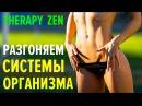 Дзен-терапия Разгоняем системы организма на 100 лет здоровой жизни