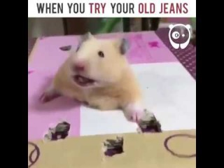 When you try your old jeans | Bored Panda