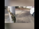 Змея VS Ящерица