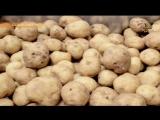 Тайны Чапман - Белая смерть - 07.05.2017 - HD