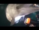 Люди помогли дельфину