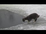 Кот на зимней рыбалке