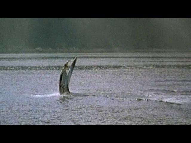 09 серия. Залив Ледников - дикое побережье Аляски (2000)