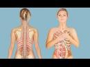 Как отличить межрёберную невралгию от болезни сердца. Признаки, характер, локализация боли