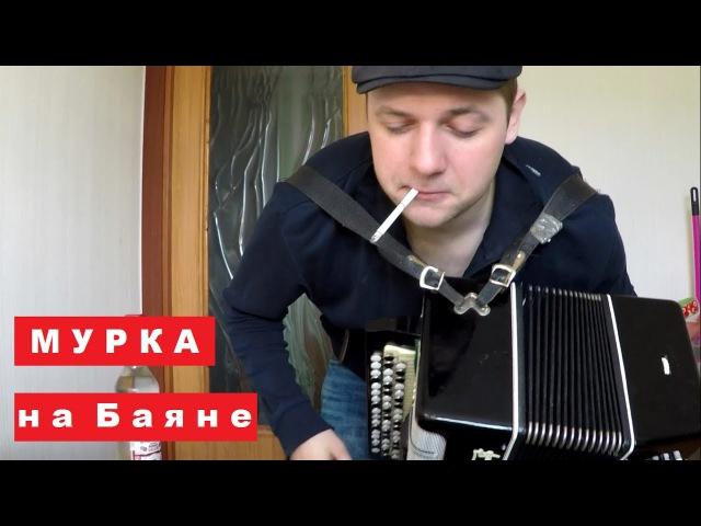 Мурка на Баяне / Murka on the Accordion