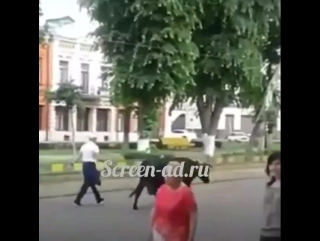 В центре Владикавказа мужчина гуляет на поводке с коровой