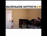 Хитрюги)
