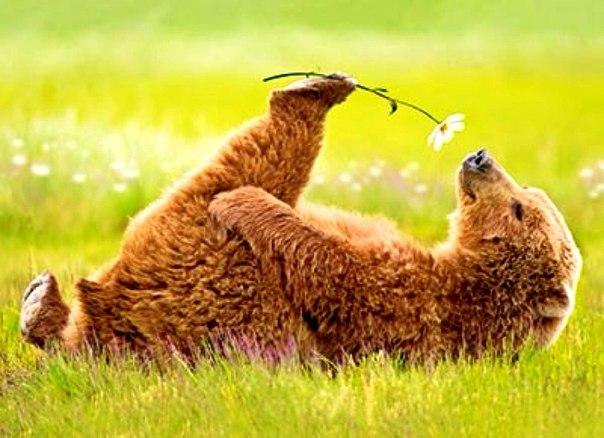 Всё, я хочу лето! Хочу отдыхать... Просто упасть в зелёную траву и смо
