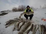 ТРЕСКА ВЕСНА БАРЕНЦЕВО МОРЕ COD SPRING BARENTS SEA