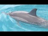 Дельфины у себя дома! 🌊🐬🐬🐬 💦Прекрасные , свободные и очень впечатляющие 👀 Никогда не видела так много дельфинов в одном месте 🌊🌊🌊 #океан #свобода #дельфины #мирживотных #животные