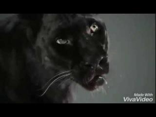 Пантера БАГИРА
