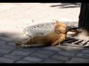 Смешные кошки приколы про кошек и котов 2017 12 Спящие Коты и Белка