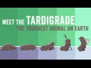 Meet the tardigrade the toughest animal on Earth Thomas Boothby