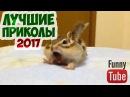 ЛУЧШИЕ ПРИКОЛЫ 2017 СМЕШНО ДО СЛЁЗ смешные видео про людей и животных