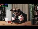 Смешная подборка про кошек и собак 2014 - 2015