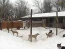 Зоолохотрон 2 - В чем суть всего происходящего