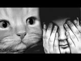 САМОЕ ГРУСТНОЕ ВИДЕО - ПОПРОБУЙ НЕ ЗАПЛАКАТЬ ЧЕЛЛЕНДЖ - ТЕСТ НА ПСИХИКУ