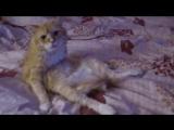 Смешные кошки приколы про кошек и котов 2017 #21 (Позитивные и очень красивые ки