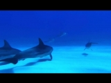 Vangelis - Prelude - Dolphins