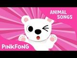 Paw Paw Polar Bear  Polar Bear  Animal Songs  Pinkfong Songs for Children