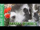 Кошка мама. 1 Истории из кошачьей жизни. Смешные кошки приколы про кошек и котов.