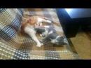 Лисенок и Волчонок - драка на диване